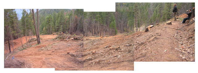 SPI clearcut, Underwood Mt.